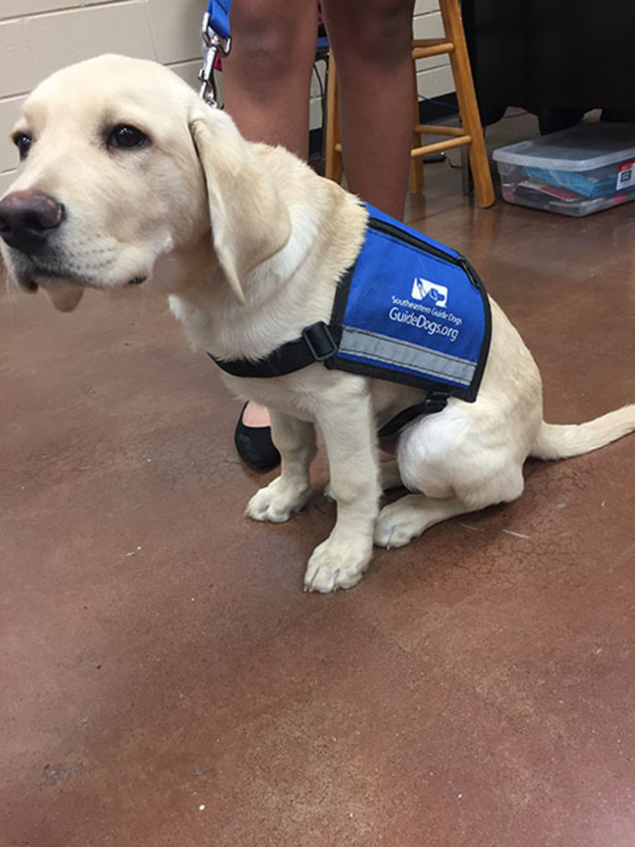 Seeing Eye Dog Training Schoolaz